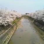 事務所前風景(春)